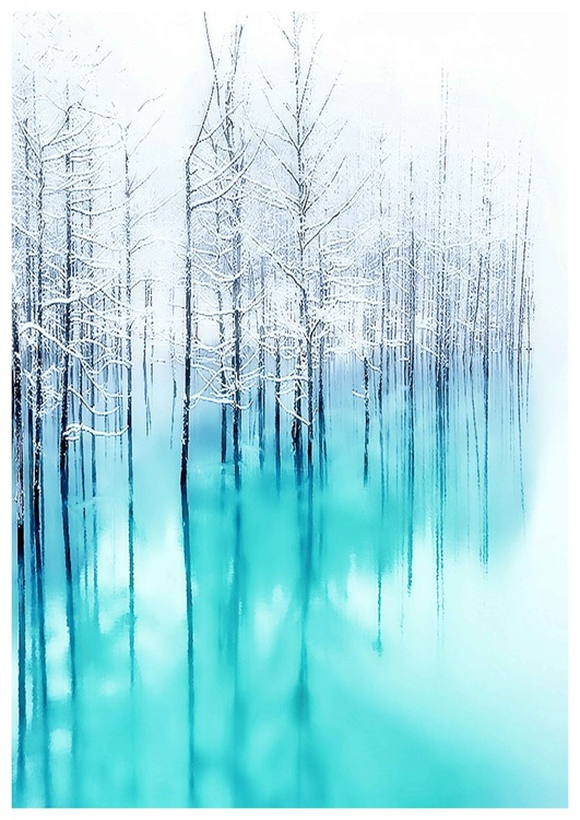 Reflected Forest - Image 0