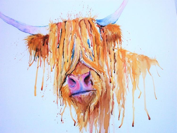 Highland cow! - Image 0