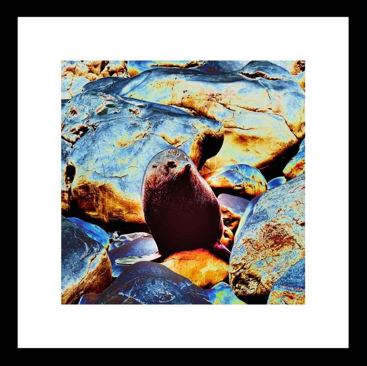 Natural Abstract - Seal on Rocks -
