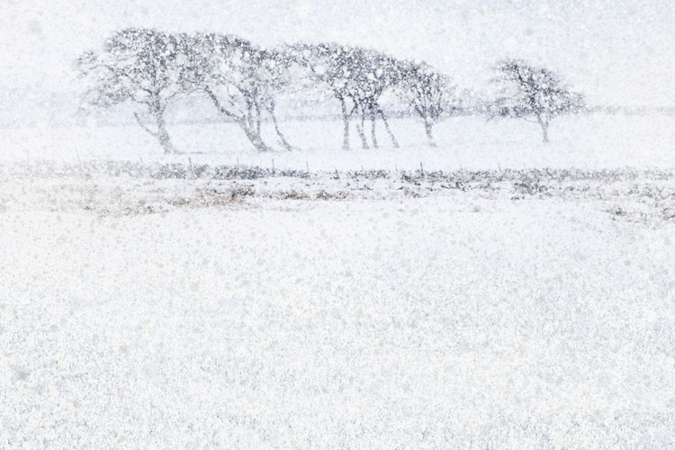 Snow Drift (Ltd Edition of only 20 Fine Art Giclee Prints from original artwork.) - Image 0