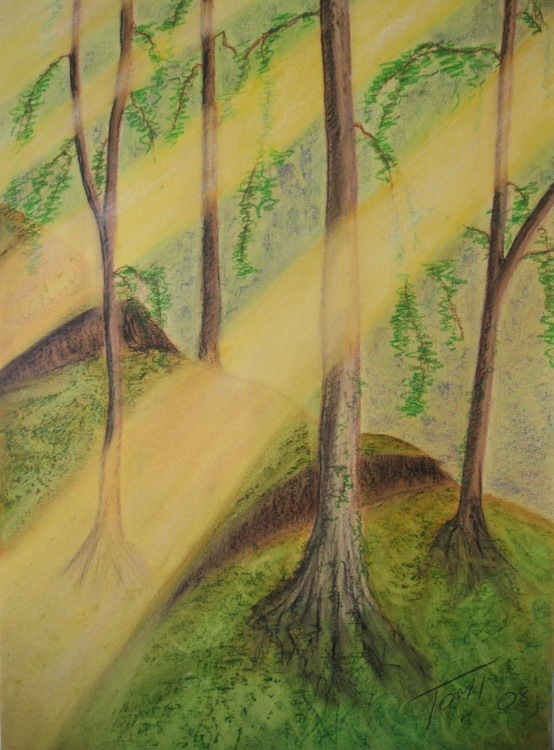 sun rays forest - Image 0