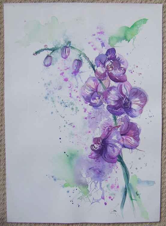 Orchids 2 -