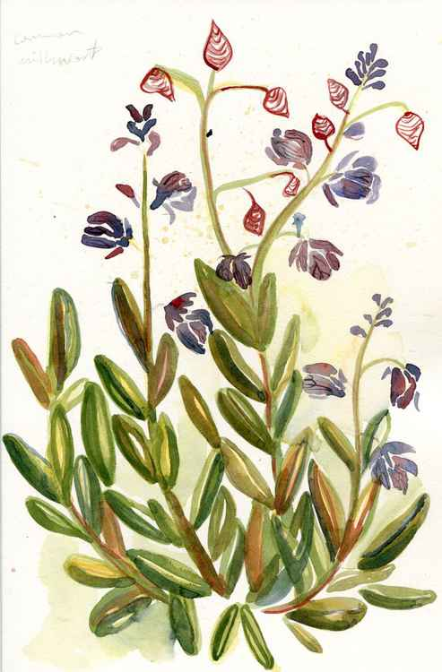 Original Watercolour Painting of British Wildflower Common Milkwort