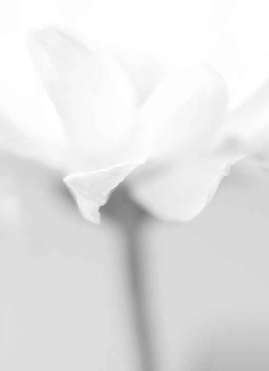 Uncolored Flower -