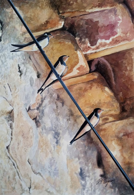 In the shade - swallows - Image 0