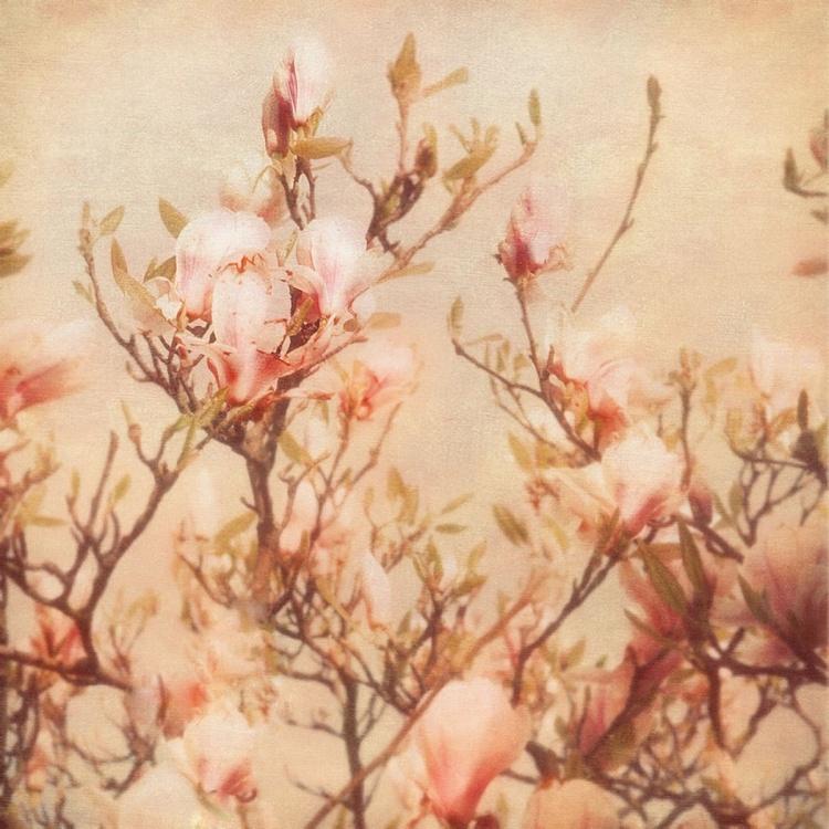 Vintage magnolia - Image 0