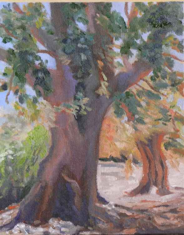 Two Olive Trees