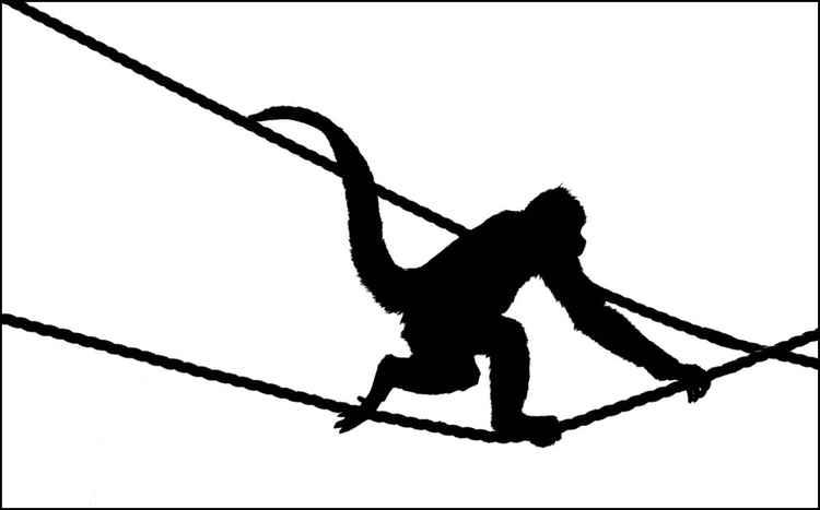 Monkey Study 3 -