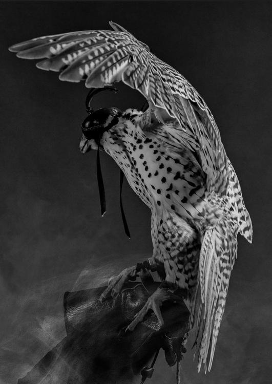 Falcon #2 - Image 0