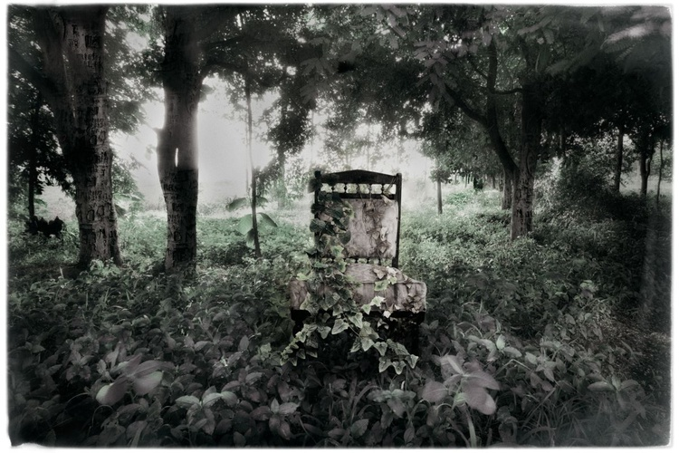 creepers, from the series  'the chair's reverie' //  edition of 5 - Image 0
