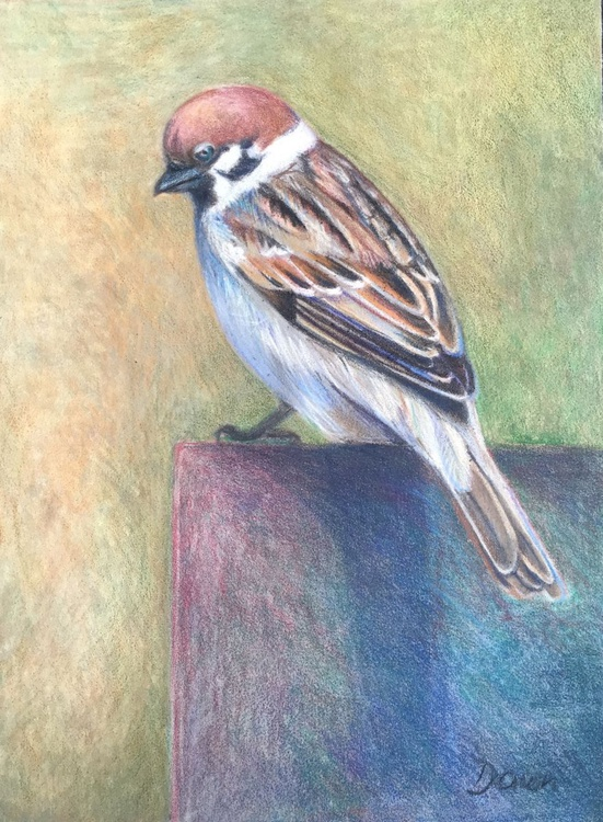 Sparrow - Image 0