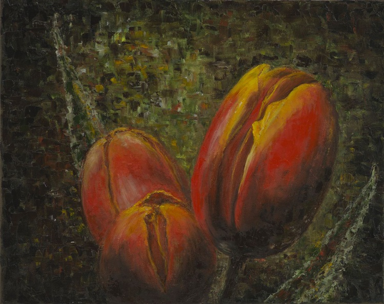 The tulips in the evening - Image 0