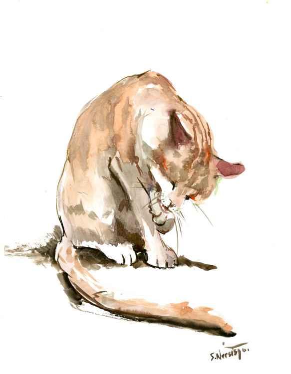 Street Cat -