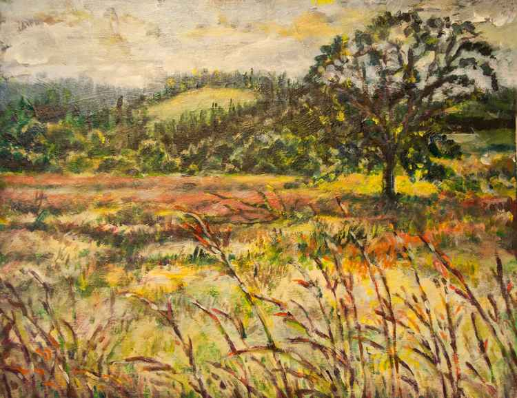 Oregon - Meadow at Tualitn
