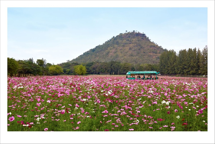 Through the Field, Thailand. - Image 0