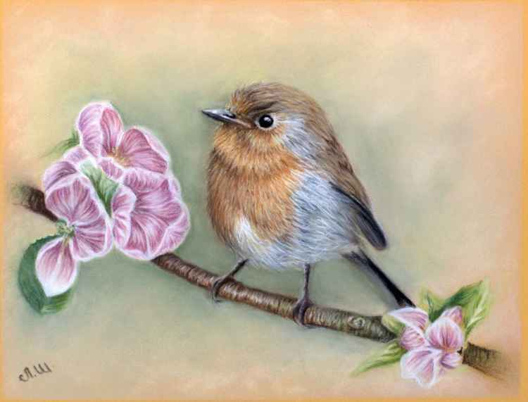 "Original pastel drawing ""Robin"" -"