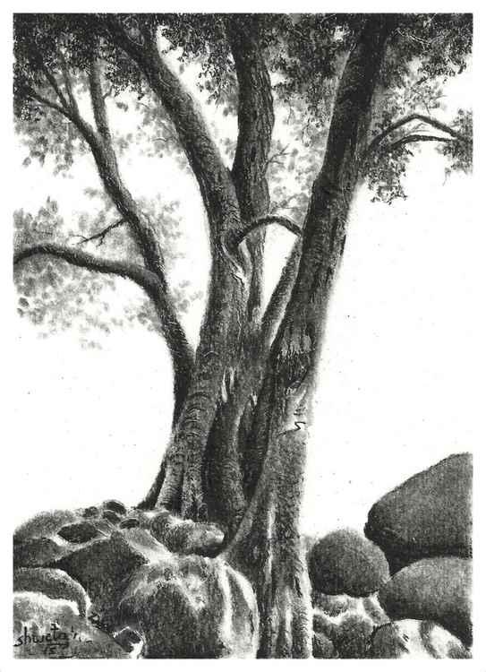 Eucalyptus Tree -