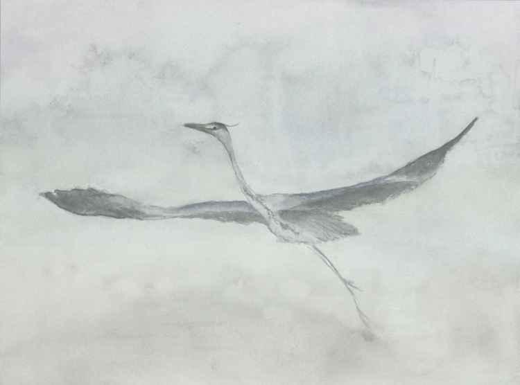 Grey Heron in the morning