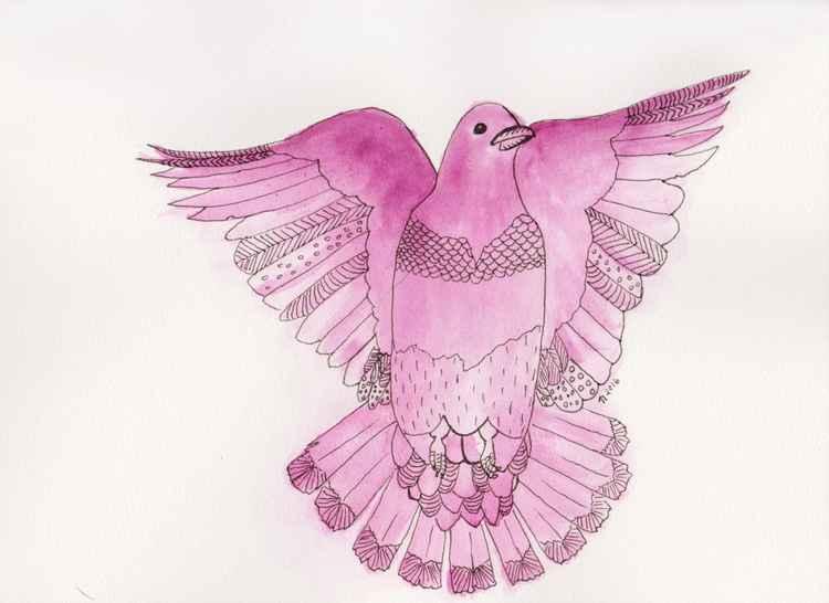 Plum Pigeon in Flight