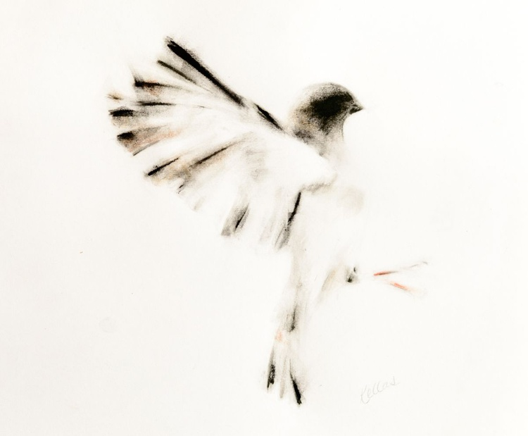 Ink and Charcoal Drawing of Sparrow - Image 0