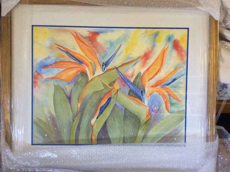 Bird of Paradise - Strelitzia -