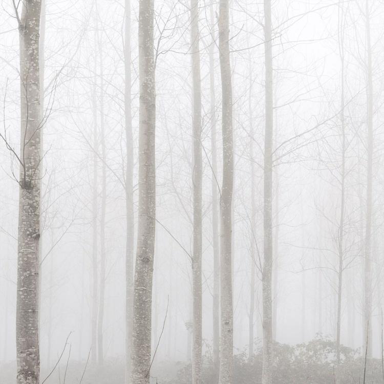 Misty Woods - Image 0