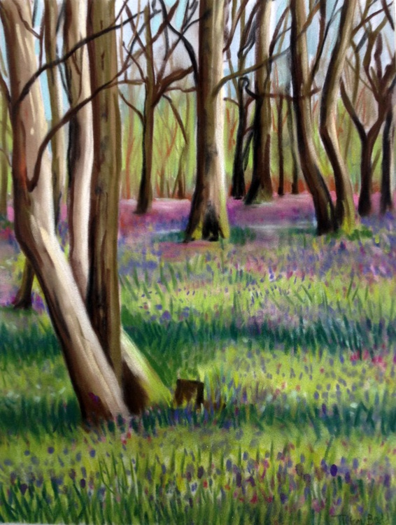 Bluebell Woods No 1 - Image 0
