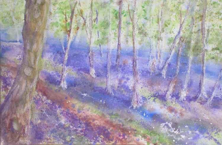 Bluebell Woods II -