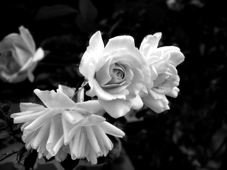 Just black, just white - Image 0