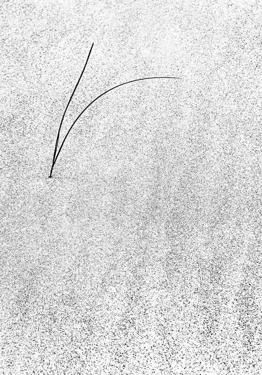 GRASS BLADES - Image 0