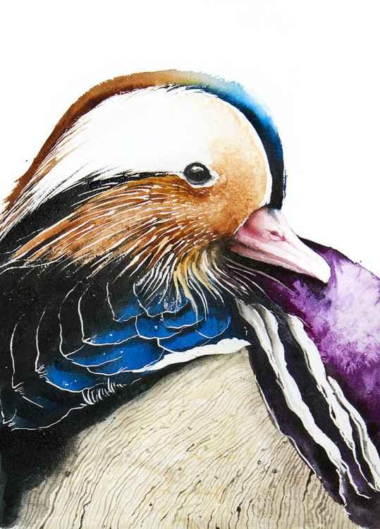 Mandarin Duck,  bird, birds, animals, wildlife watercolour painting -