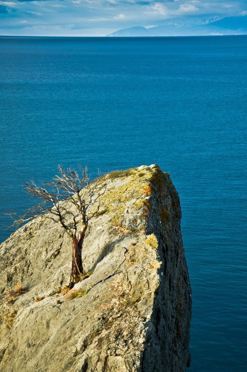 Tree on the rock. - Image 0