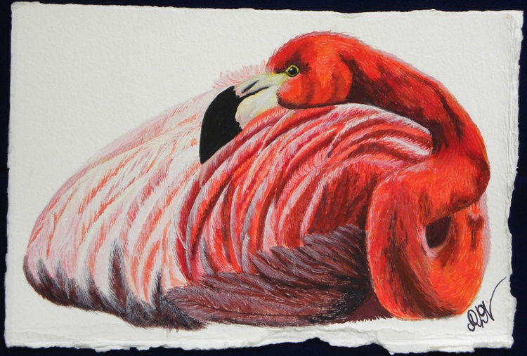 Flamingo Folly 1 - Image 0
