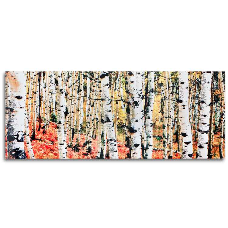 Aspen Grove | Autumn Fall Aspen Trees Landscape, Giclée on Metal