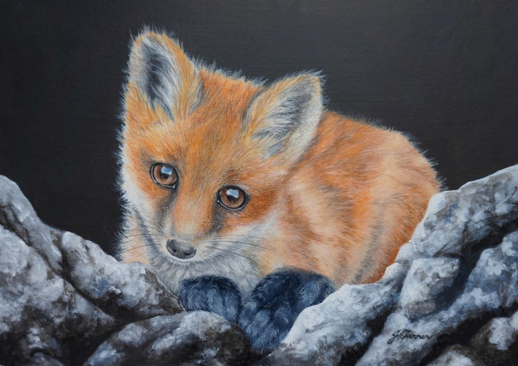 Fox Cub on Rocks - Image 0