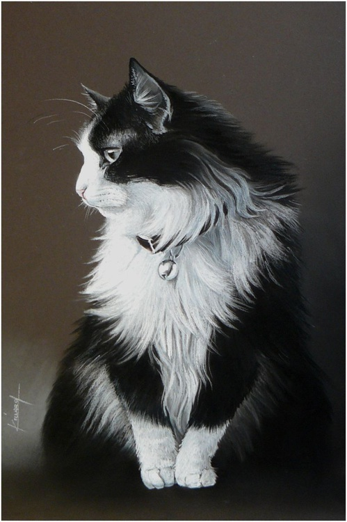 Black and white cat - Image 0