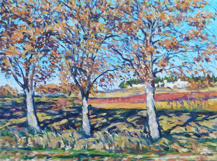 Three trees. Near the cemetery at Roubia -