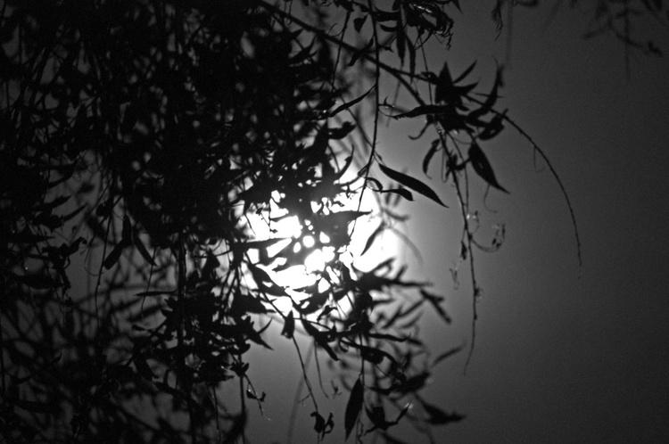Bad Moon Rising - 1/25 - 18x12in Aluminium Mounted - Image 0