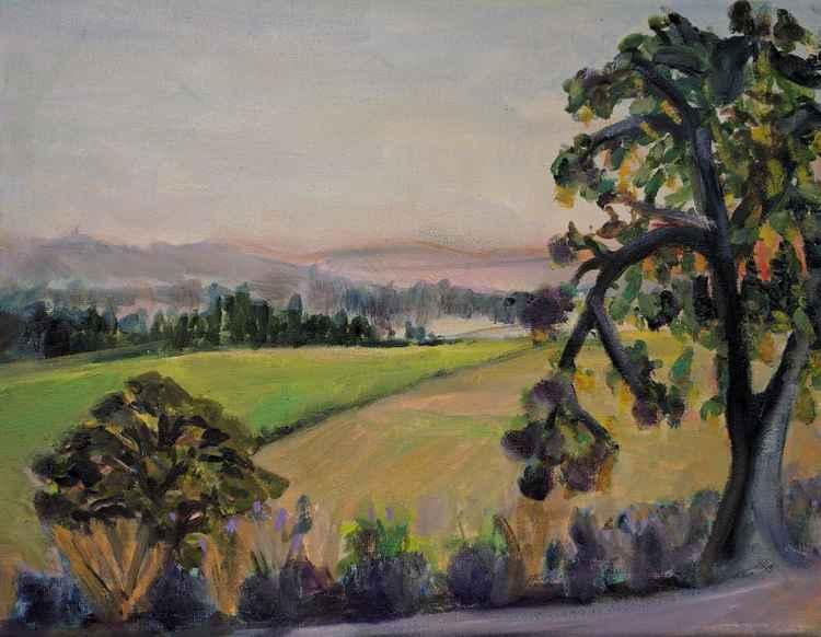 Lavender Farm at Sunset