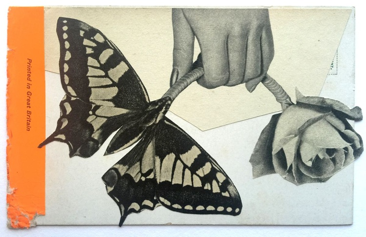 Butterfly. - Image 0