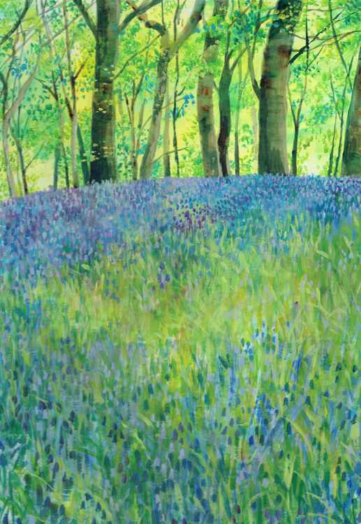 An Abundance of Bluebells -