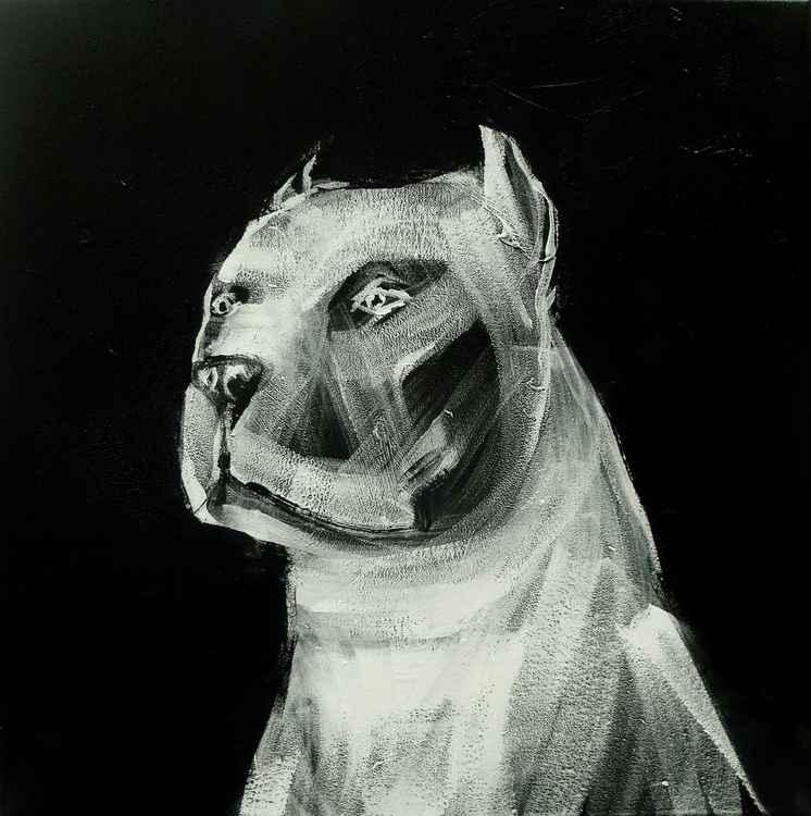 m-98 (pitbull) -