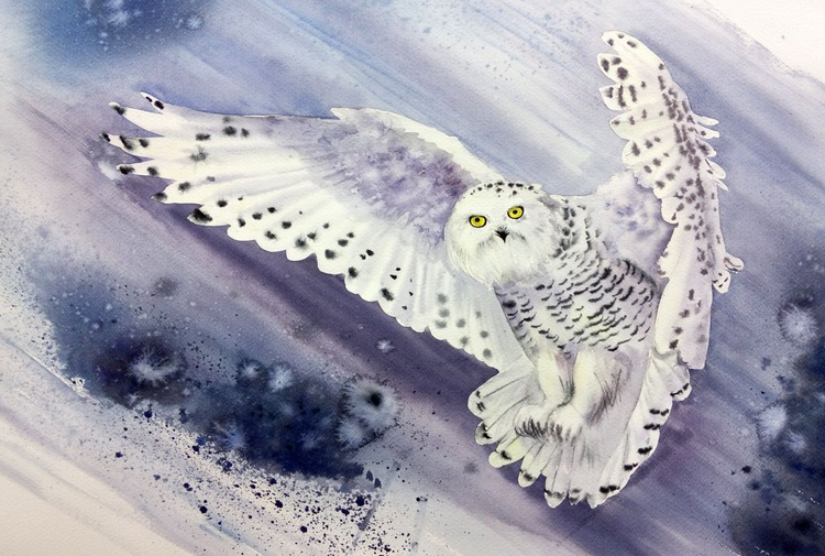 Snowy Owl Flying In Snow Storm - Image 0