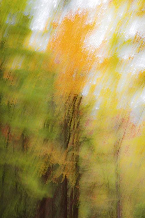 Autumn Abstract #1 - Image 0