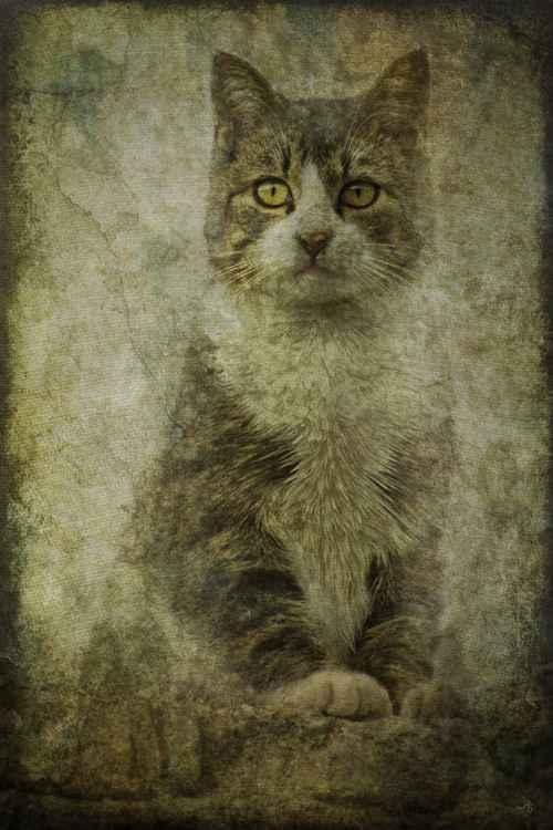 Tomcat -