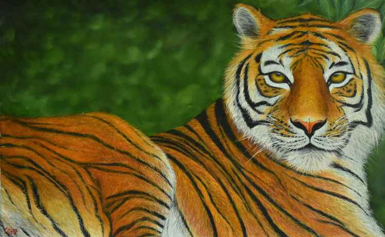 Mesmerizing Tiger -