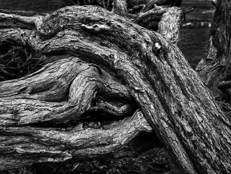 Twisted Furze -