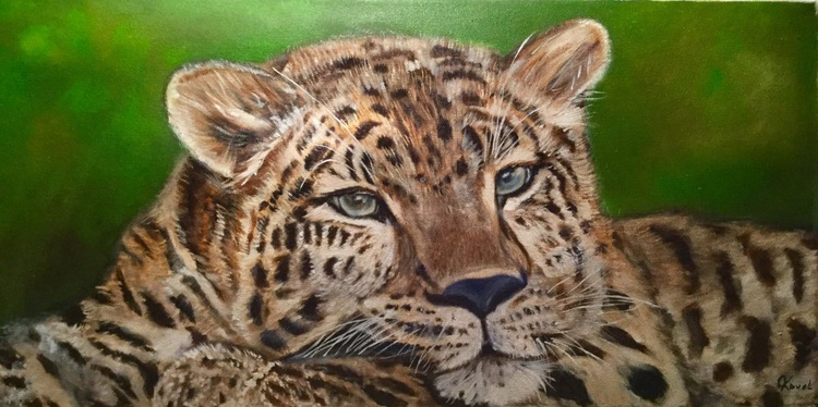 Leopard on the grass - Image 0