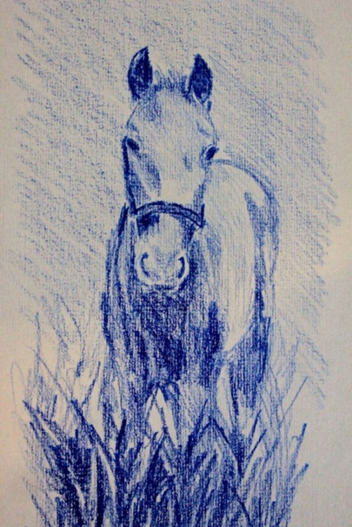 Foal in the forest - Image 0