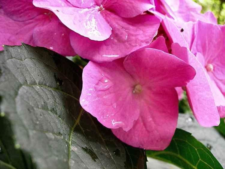 Plastic Flower -